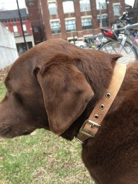 Dog Collar - Cork